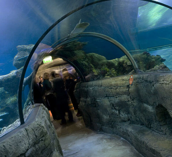 See SEA LIFE Aquarium London Tours