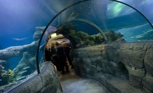 See SEA LIFE Aquarium London Tours