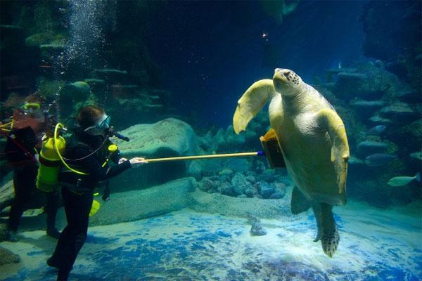 See Sea Life Aquarium London Tours Govoyager
